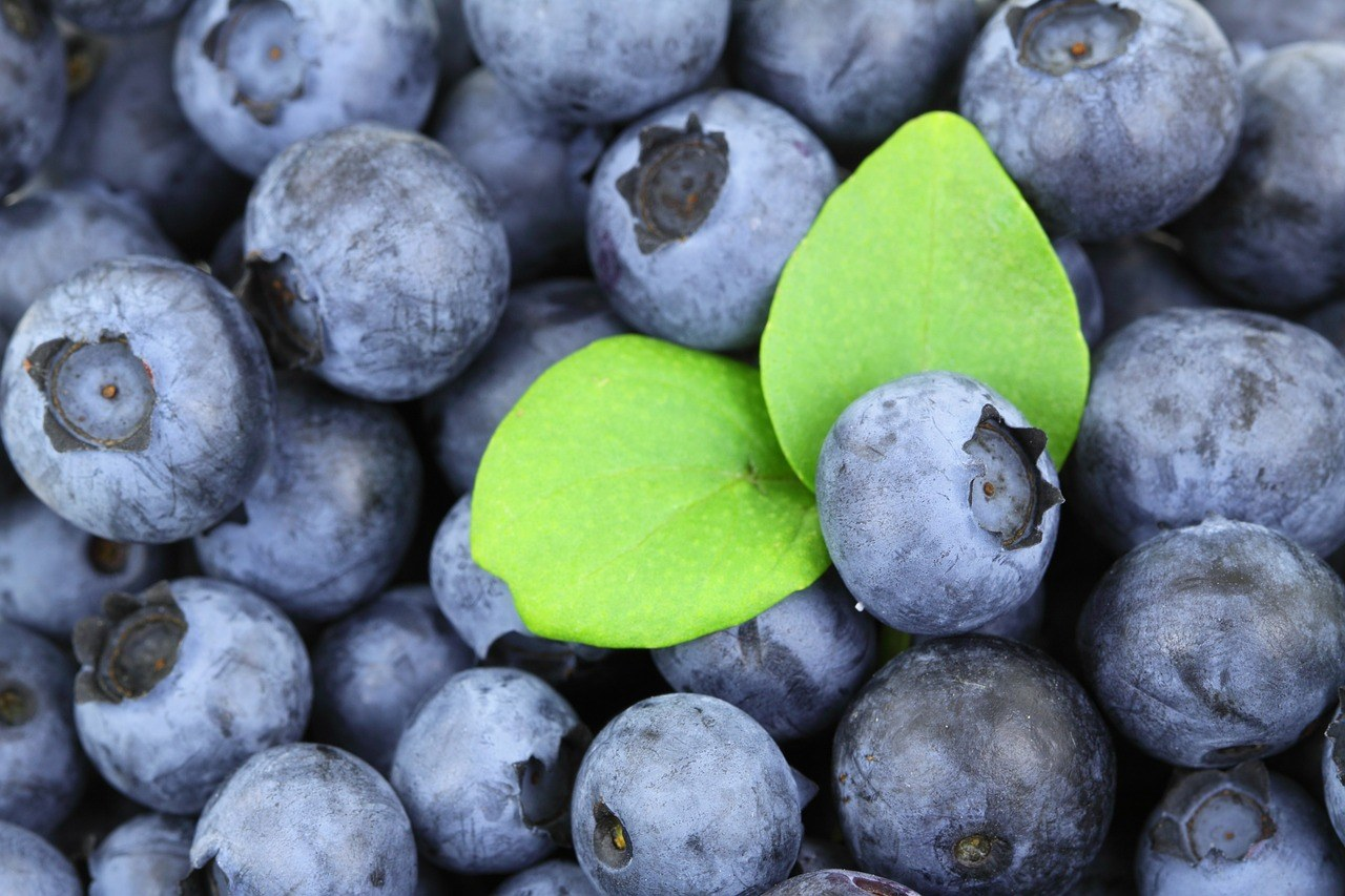 9 summer fruits blueberry