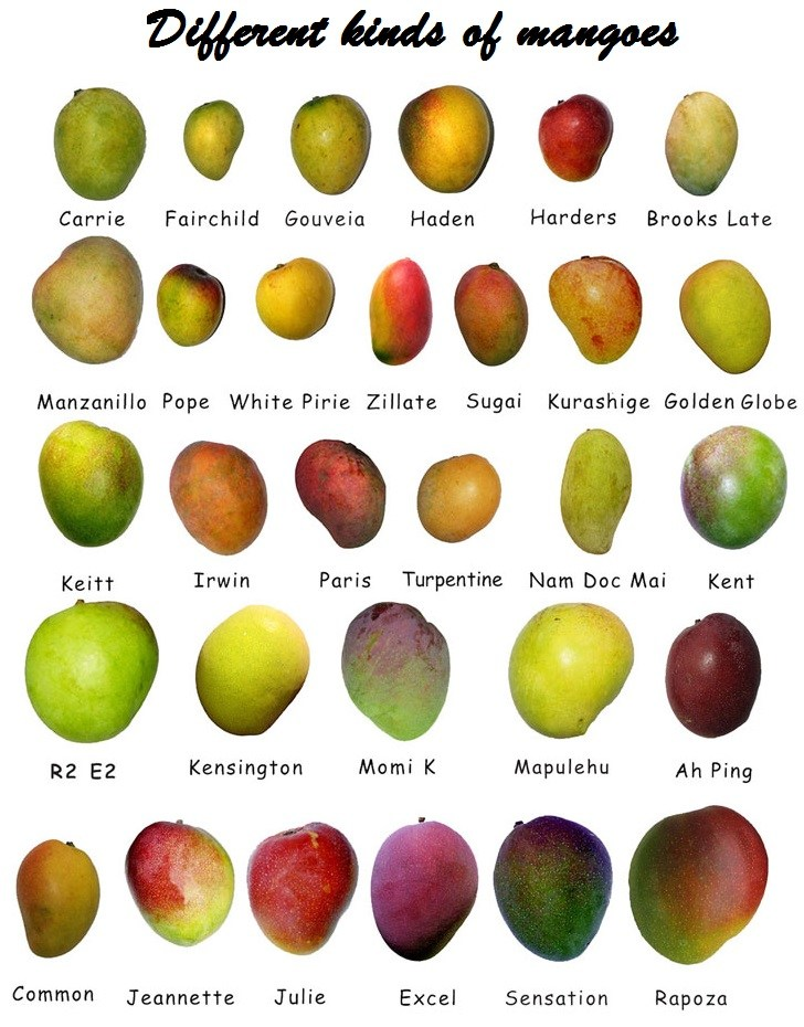 different kinds of mango